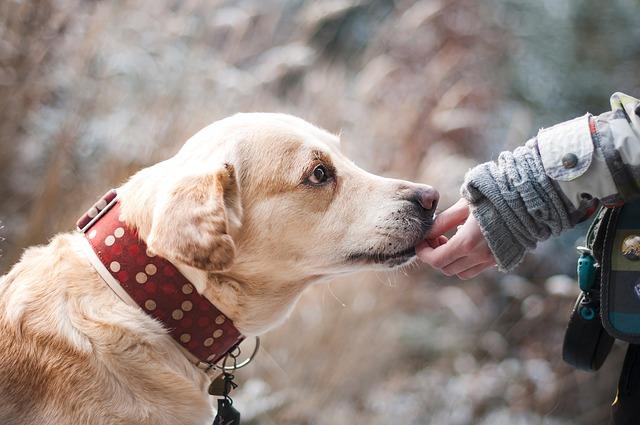3 redenen waarom jij met de hond moet gaan wandelen